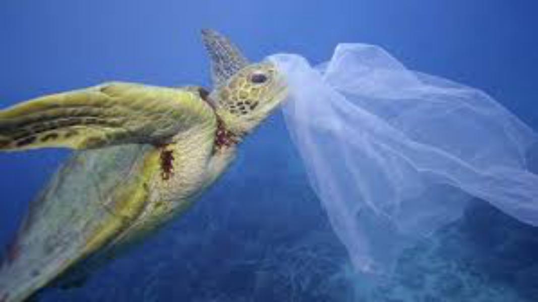 Adiós a las bolsas de plástico gratuitas